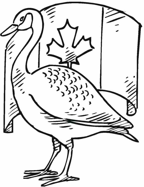 loon pictures printable loon pages coloring pages loon printable pictures