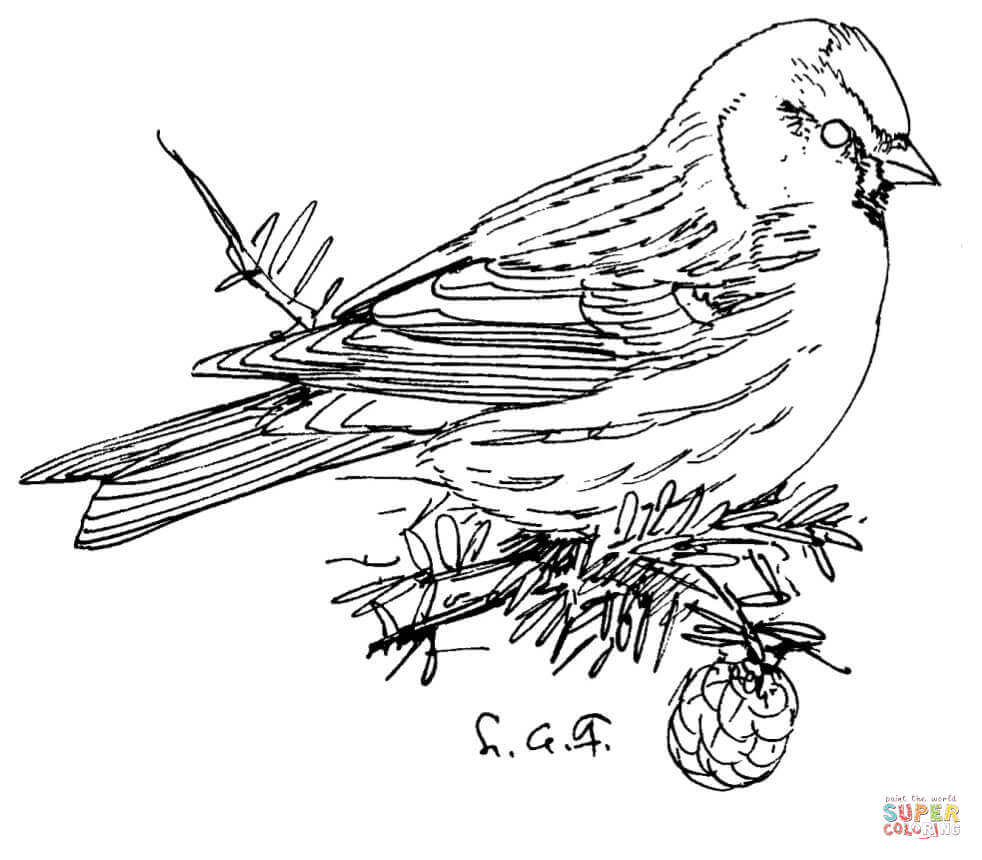 loon pictures printable loon pages coloring pages pictures printable loon