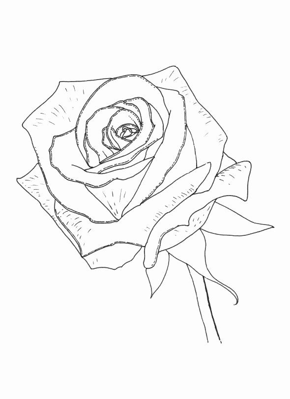 luther rose coloring page 32 luther rose coloring page in 2020 reformation day coloring rose page luther