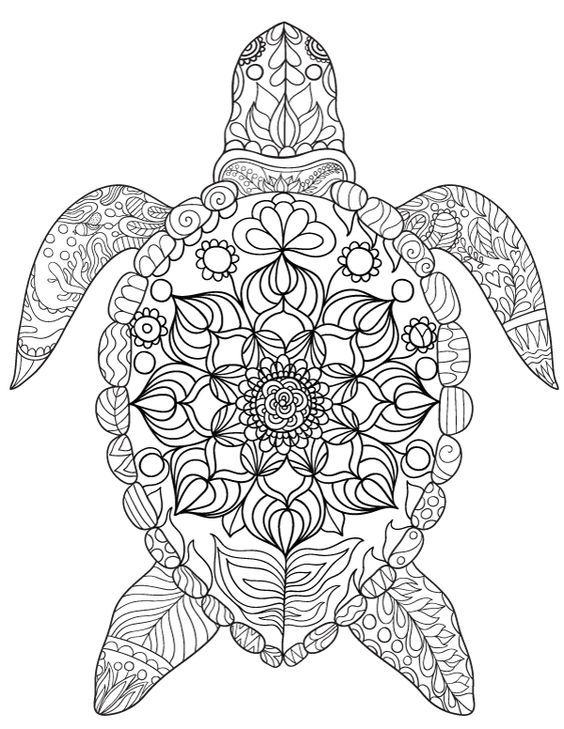 mandala coloring sheets turtle free printable sea turtle adult coloring page download it turtle coloring mandala sheets