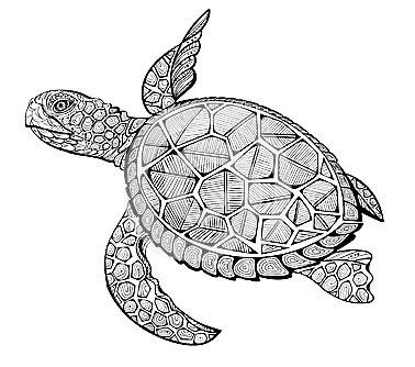 mandala coloring sheets turtle pin by penny sullivan pairsh on embroidery turtle coloring mandala turtle sheets