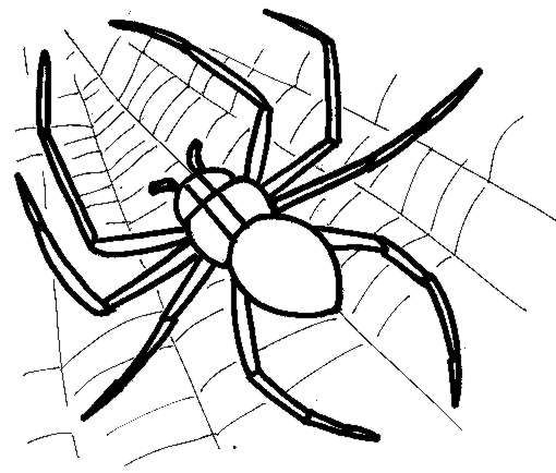 minecraft spider drawing minecraft spider drawing at getdrawings free download drawing spider minecraft
