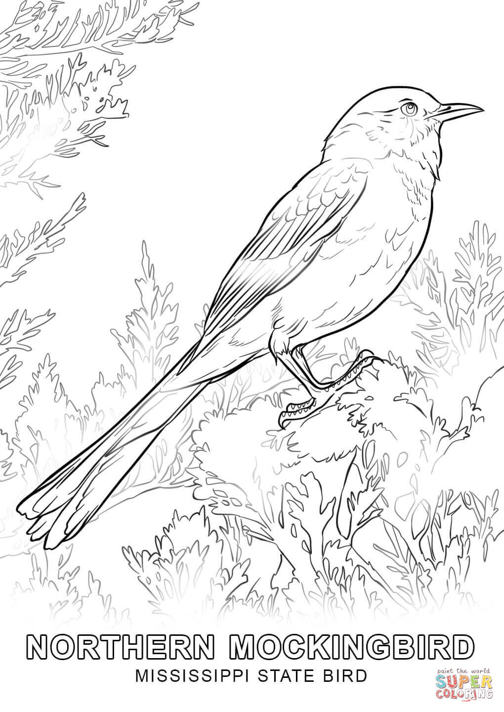 mississippi state bird usa states state of mississippi coloring pages state mississippi bird