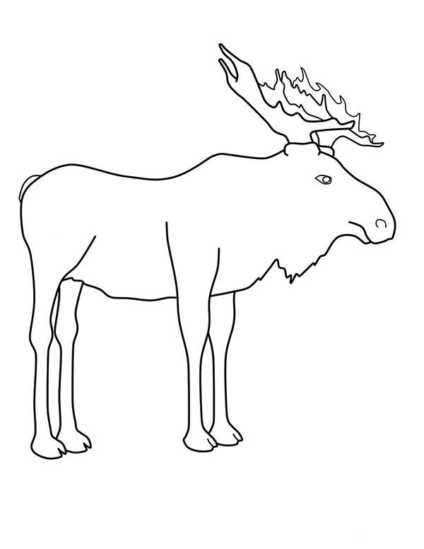 moose outline outline of moose coloring page kids play color moose outline