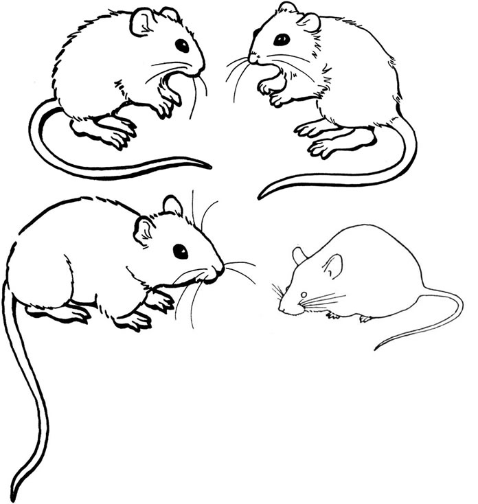 mouse pictures to color coloring page mouse animal coloring pages 4 to color pictures mouse