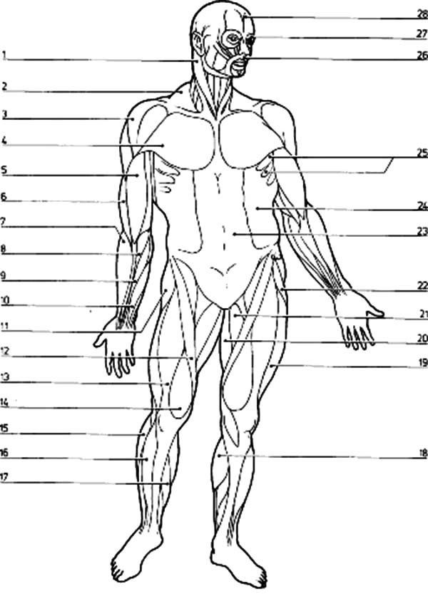muscle coloring pages the muscular system coloring pages coloring home pages muscle coloring 1 1