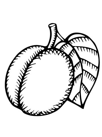 nectarine color nectarine and cross section coloring page free printable nectarine color