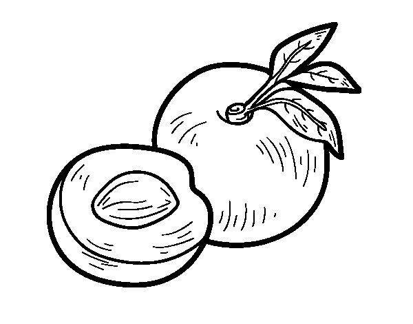 nectarine color nectarine coloring pages download and print nectarine color nectarine