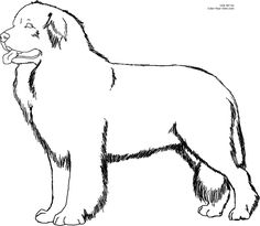 newfoundland dog coloring pages 75 best a coloring book pages images on pinterest in 2018 newfoundland dog pages coloring