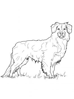 newfoundland dog coloring pages dog coloring pages bing images dog coloring page newfoundland coloring dog pages