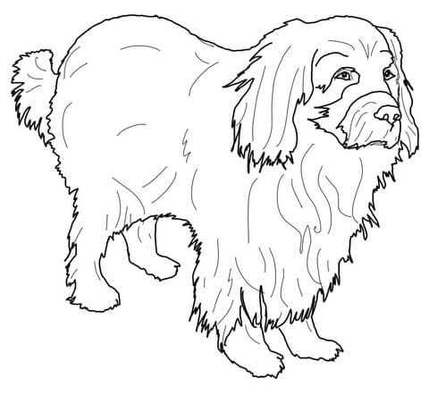 newfoundland dog coloring pages labrador cartoon drawing at getdrawings free download coloring newfoundland pages dog