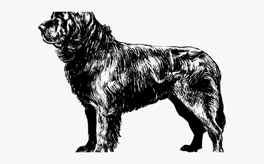 newfoundland dog coloring pages newfoundland coloring pages at getcoloringscom free dog newfoundland pages coloring