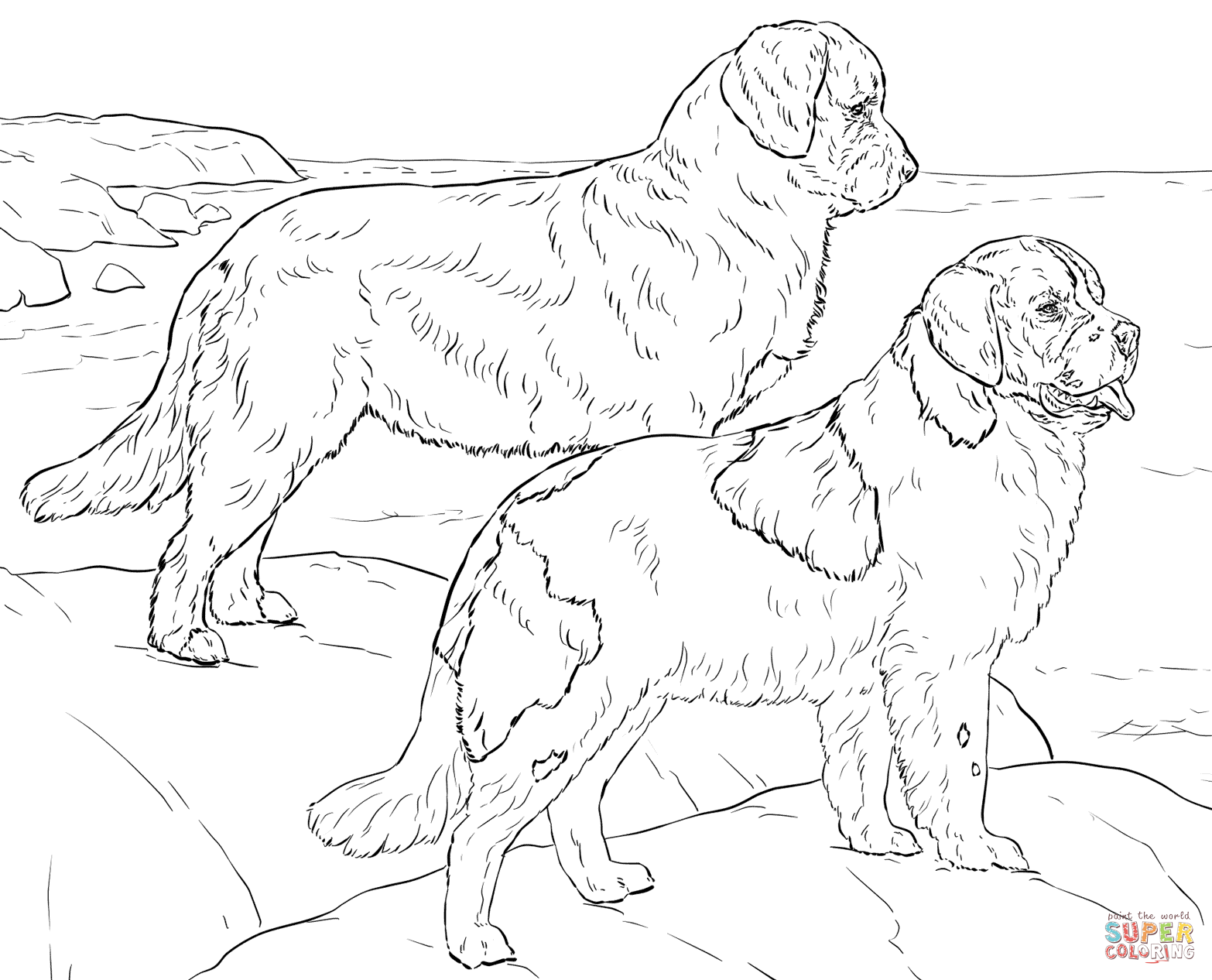 newfoundland dog coloring pages newfoundland drawing at getdrawings free download pages coloring dog newfoundland