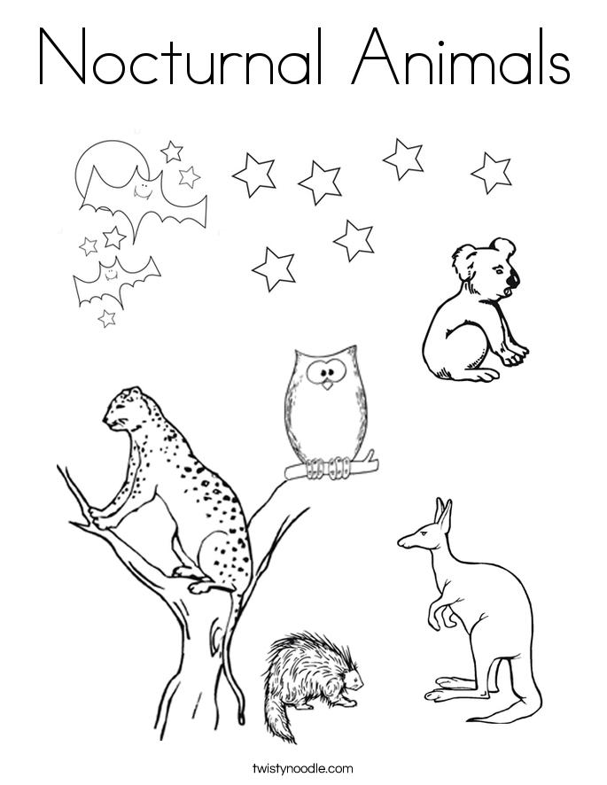 nocturnal animals colouring sheets nocturnal animals coloring page twisty noodle animals colouring sheets nocturnal