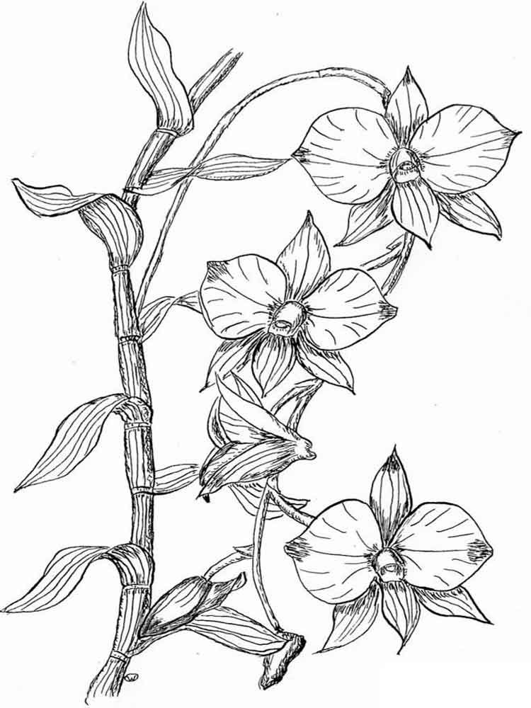 orchid colouring pages orchid coloring pages download and print orchid coloring pages orchid colouring