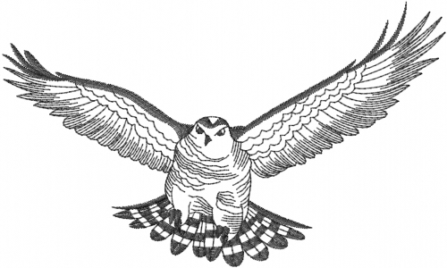 outline of a hawk eagle outline cliparts free download on clipartmag outline hawk of a