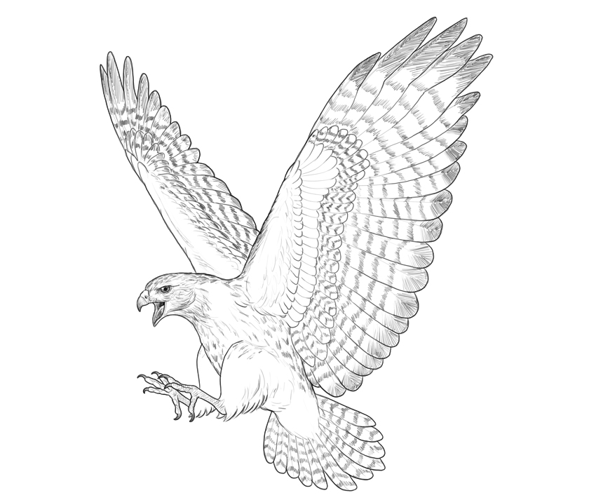 outline of a hawk flying bird clipart black and white free download on outline of hawk a