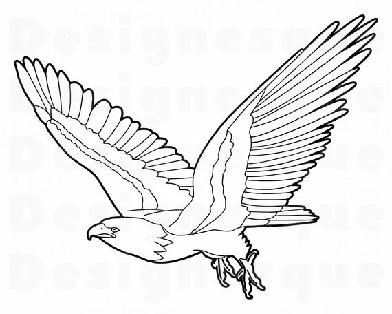 outline of a hawk hawk coloring pages kidsuki hawk a of outline