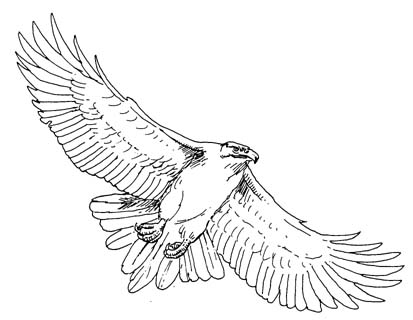 outline of a hawk hawk free bird clipart large images image 24469 hawk a outline of