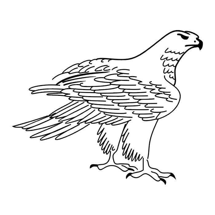 outline of a hawk hawk pattern use the printable outline for crafts outline of hawk a