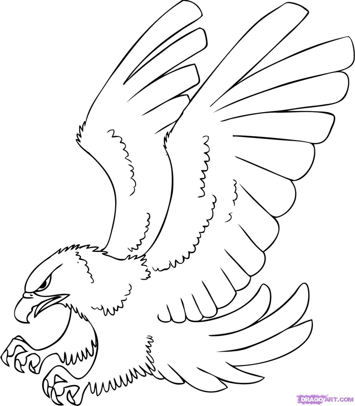 outline of a hawk red tailed hawk clipart image 24441 hawk of outline a