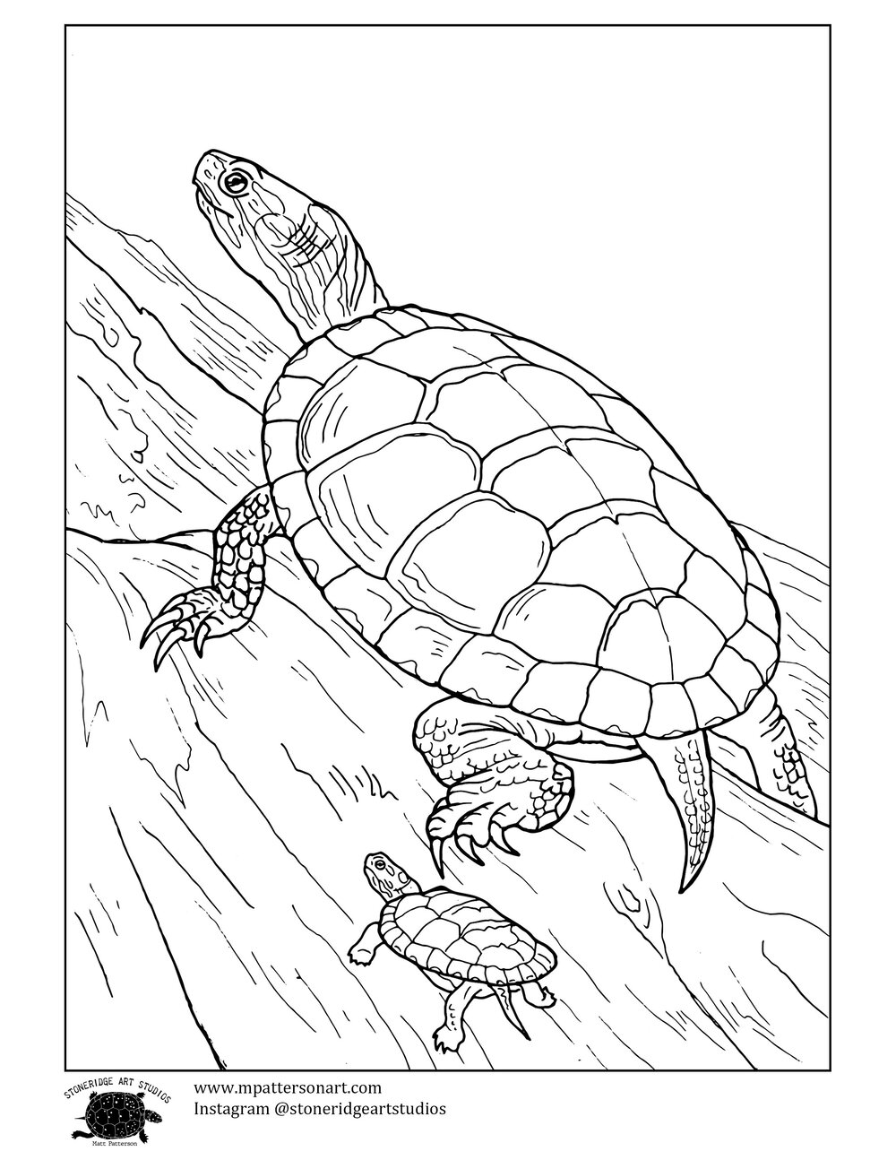 painted turtle coloring page box turtle drawing at getdrawings free download page turtle painted coloring