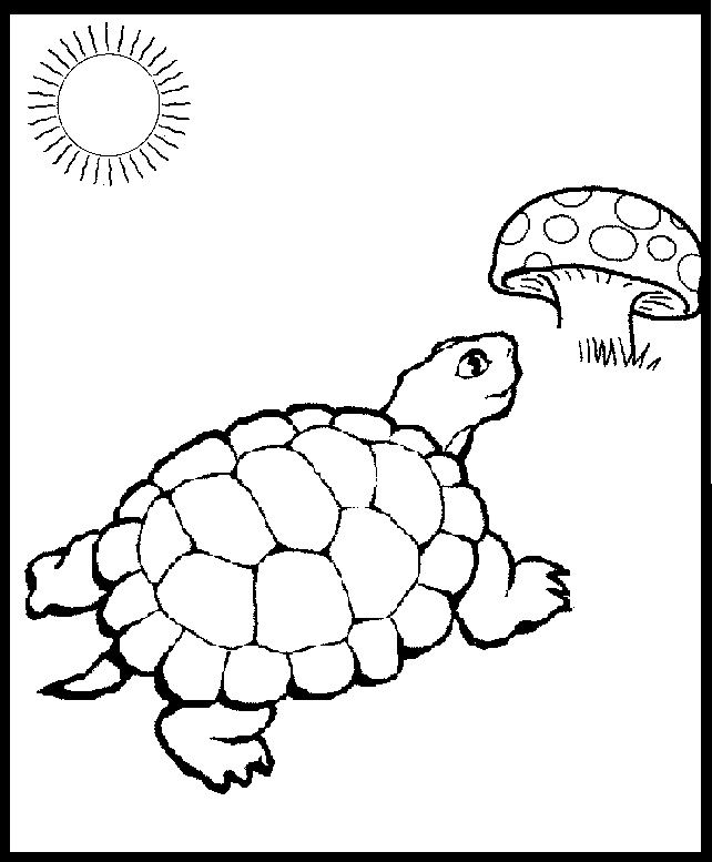 painted turtle coloring page coloring page of a turtle youngandtaecom in 2020 turtle coloring page painted