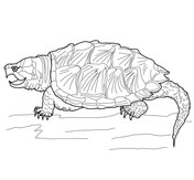 painted turtle coloring page coloring pages for kids color pages turtle coloring turtle page painted coloring