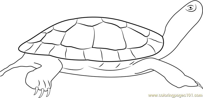 painted turtle coloring page eastern painted turtle coloring page free turtle turtle coloring page painted
