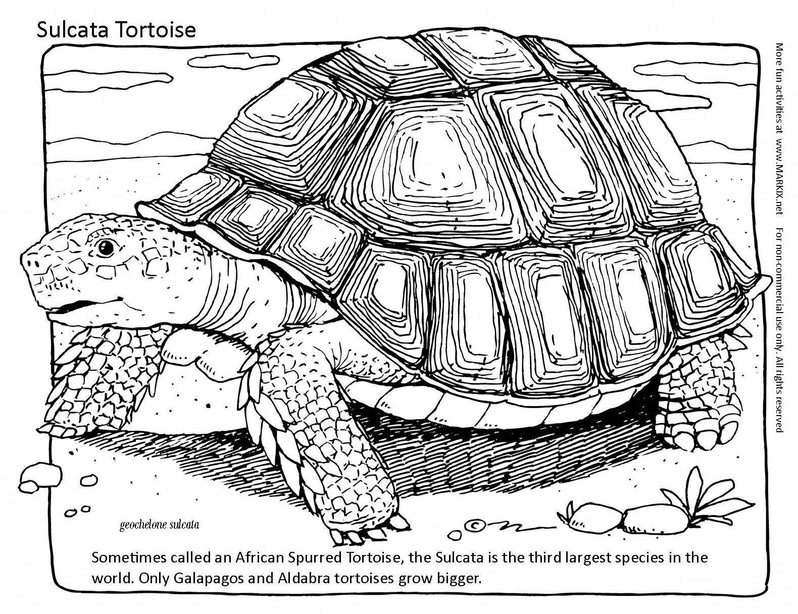painted turtle coloring page painted turtle coloring page coloring page turtle painted