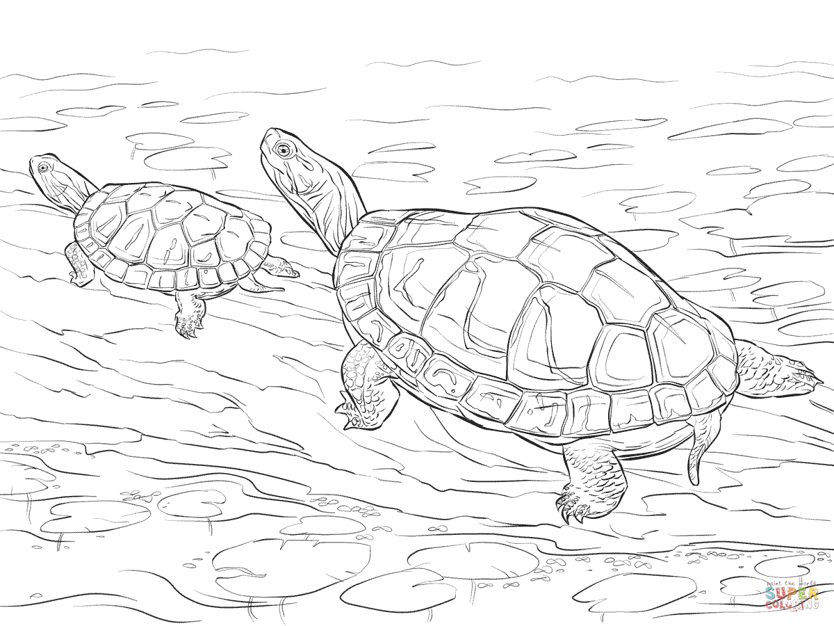 painted turtle coloring page painted turtle coloring page coloring turtle painted page