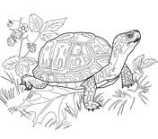 painted turtle coloring page southern painted turtle connect dots turtle painting page coloring turtle painted