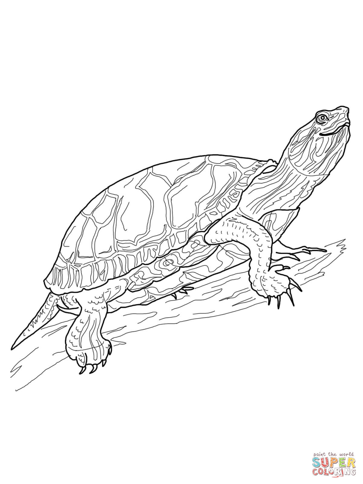 painted turtle coloring page two painted turtles coloring page free printable painted coloring turtle page