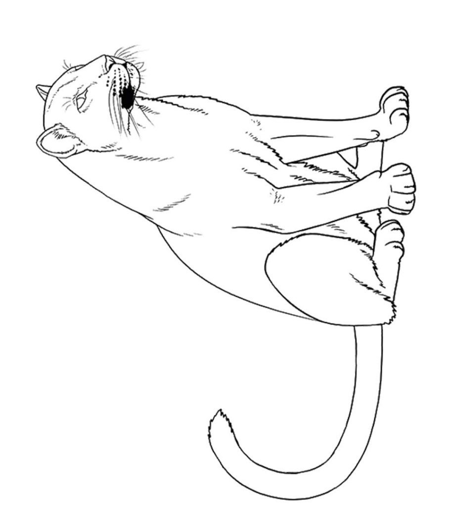 panther coloring page 10 printable panther coloring pages your toddler will love panther coloring page