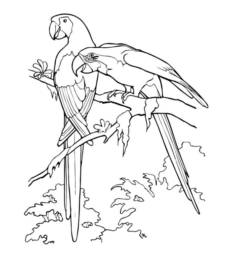 parrot picture to color parrot on branch coloring page download print online color to picture parrot