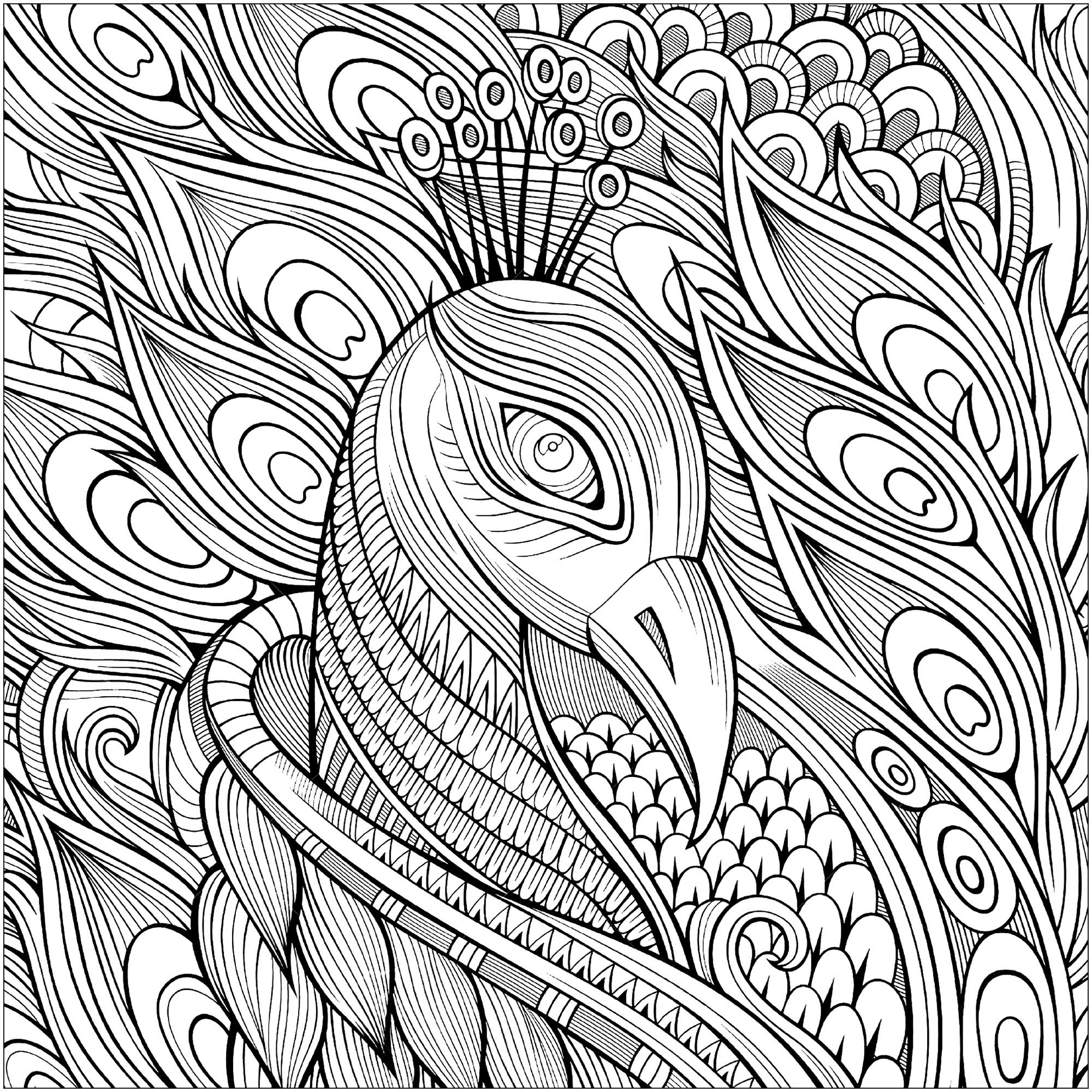 peacock coloring images peacock coloring page stock illustration download image coloring peacock images