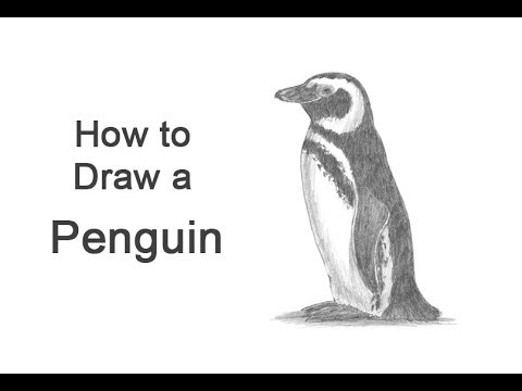 penguin steps how to draw a realistic penguin mishkanetcom penguin steps