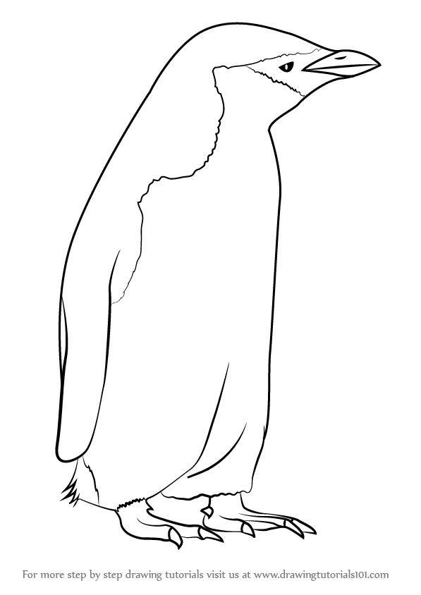 penguin steps learn how to draw a chinstrap penguin antarctic animals penguin steps