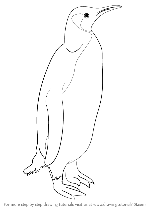 penguin steps learn how to draw a penguin antarctic animals step by penguin steps