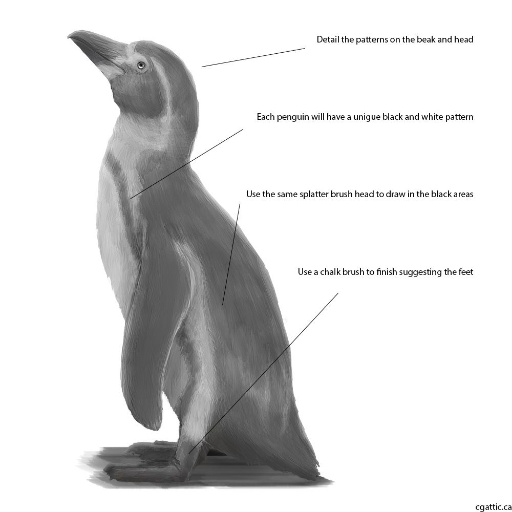 penguin steps realistic penguin drawing in 4 steps with photoshop in steps penguin