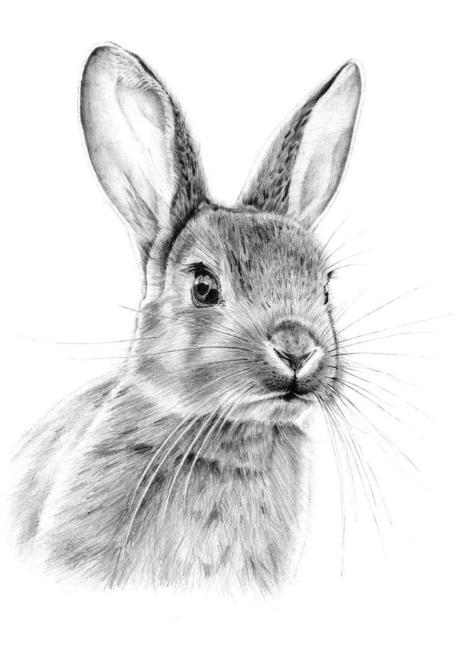 picture of easter bunny 3 ways to draw the easter bunny wikihow easter of bunny picture