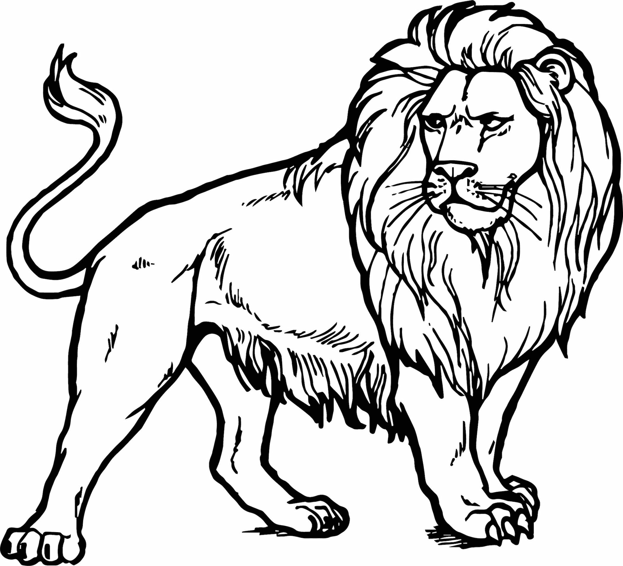 picture of lion coloring page a lion with little lions coloring pages coloring home picture page lion coloring of