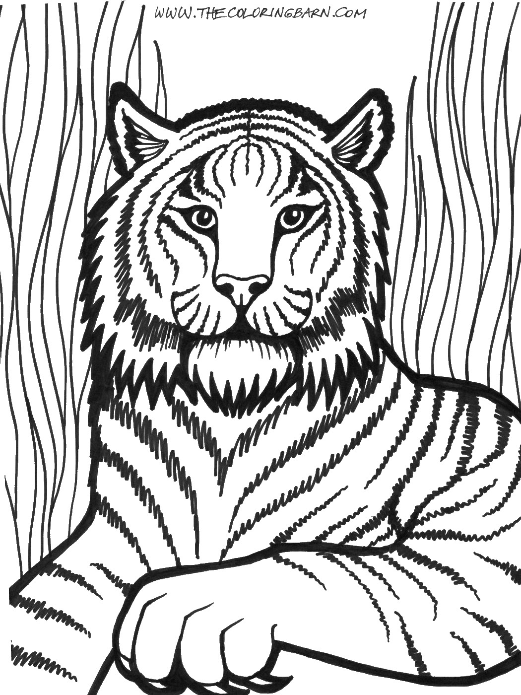 picture of lion coloring page free printable lion coloring pages for kids coloring page of lion picture