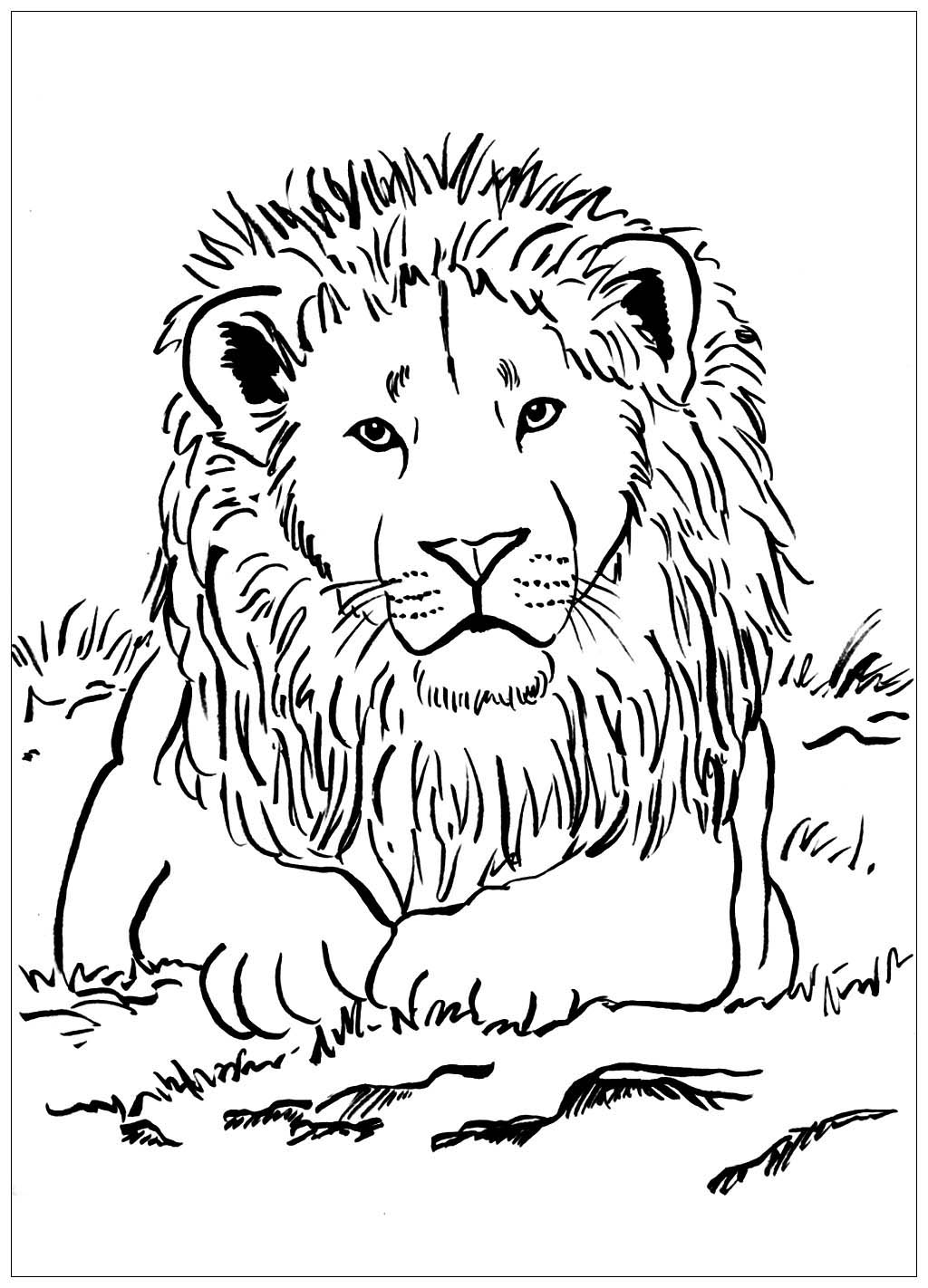 picture of lion coloring page lion coloring pages at getcoloringscom free printable lion page of coloring picture