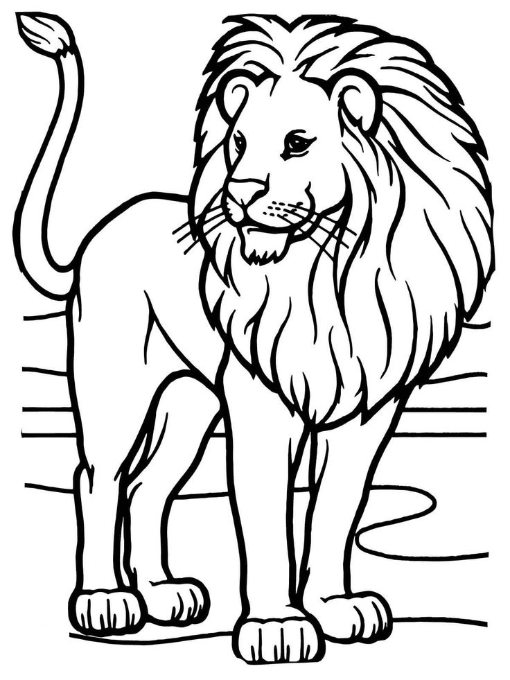 picture of lion coloring page lion coloring pages to download and print for free of page lion coloring picture