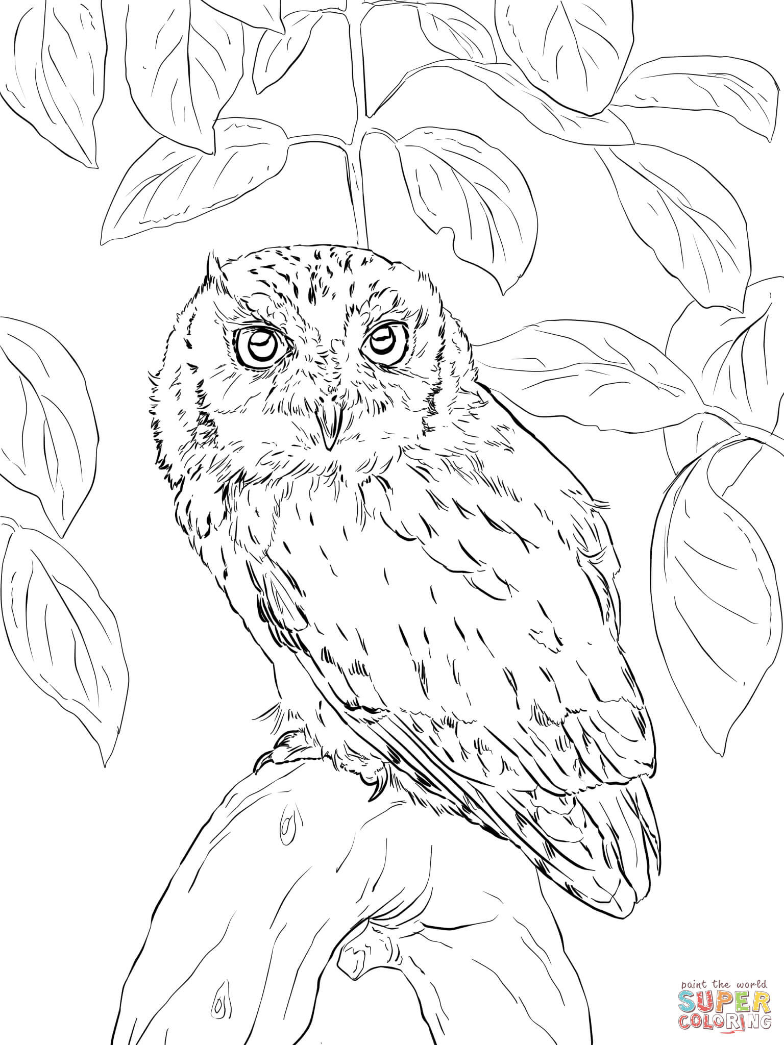 picture of owls to color cute owl coloring page free printable coloring pages picture to color of owls