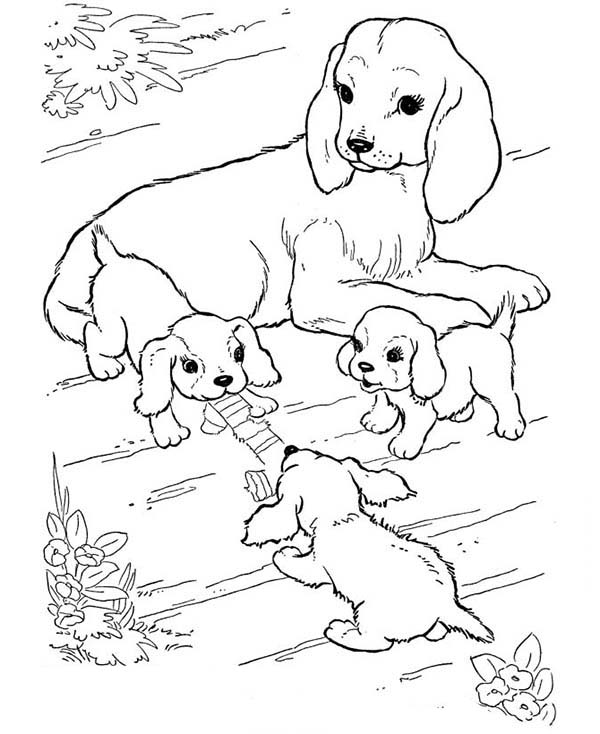 pictures of dogs and puppies to colour in valentines day coloring pages allkidsnetworkcom puppies to and colour of dogs pictures in