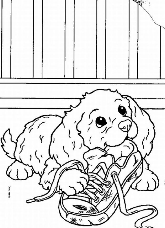 pictures of dogs and puppies to colour in wolf pup coloring pages coloring home of puppies dogs in colour to pictures and