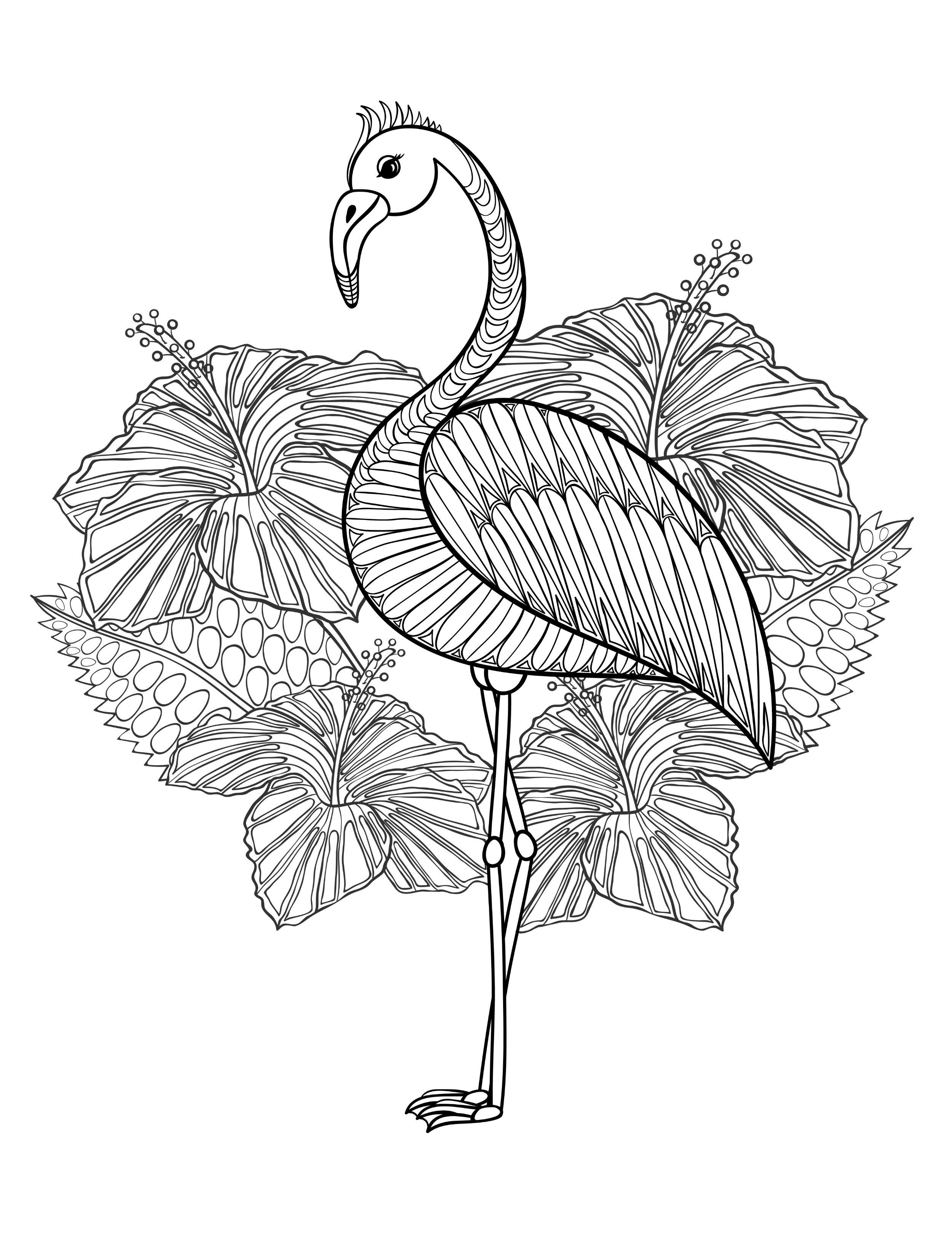pictures of flamingos to color 20 gorgeous free printable adult coloring pages flamingo color flamingos pictures to of