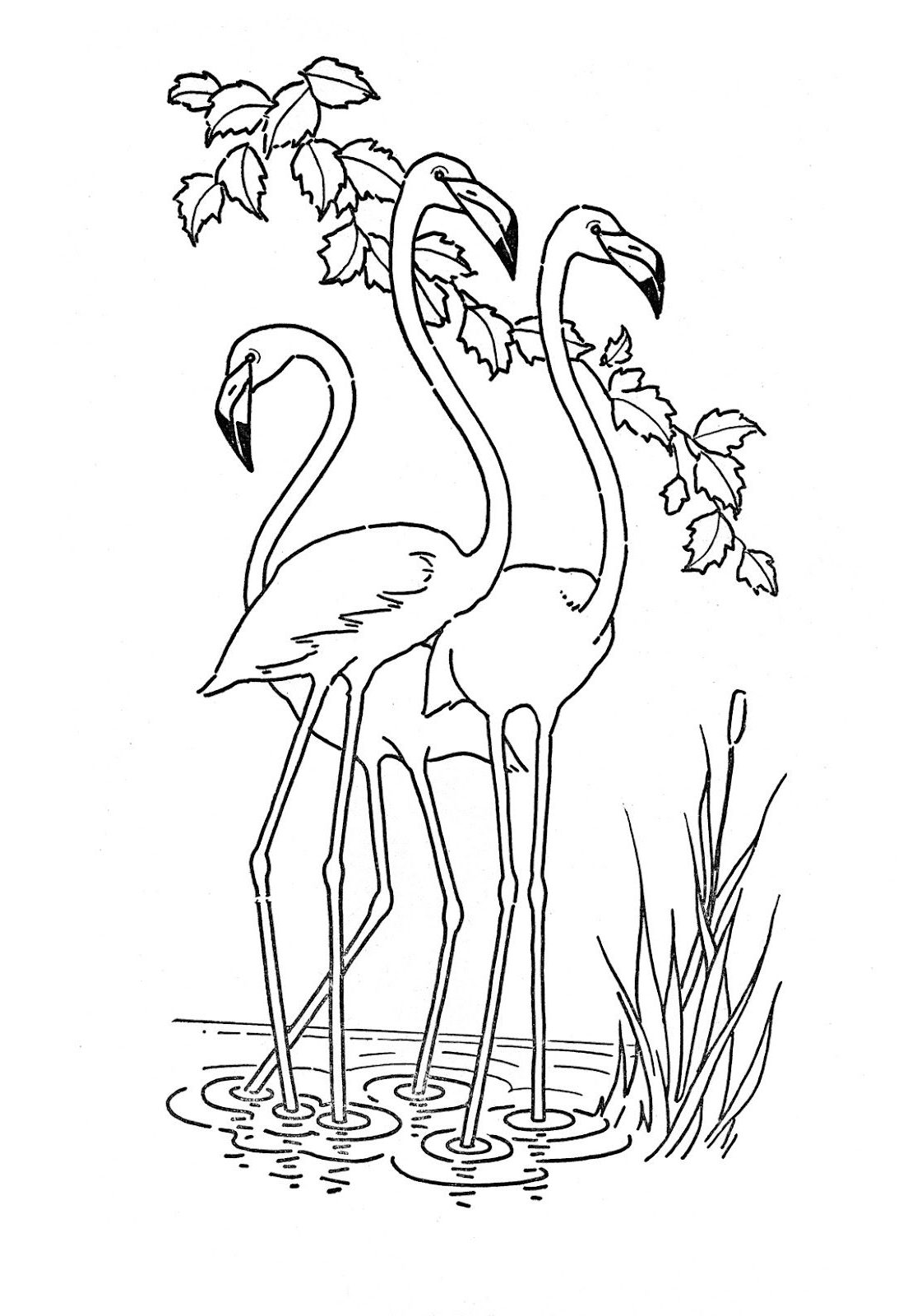 pictures of flamingos to color pink flamingo coloring page at getdrawings free download flamingos to of pictures color